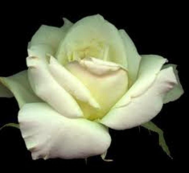 Sentite condoglianze alla nosta carissima amica lucy x la for Frasi di conforto per lutto